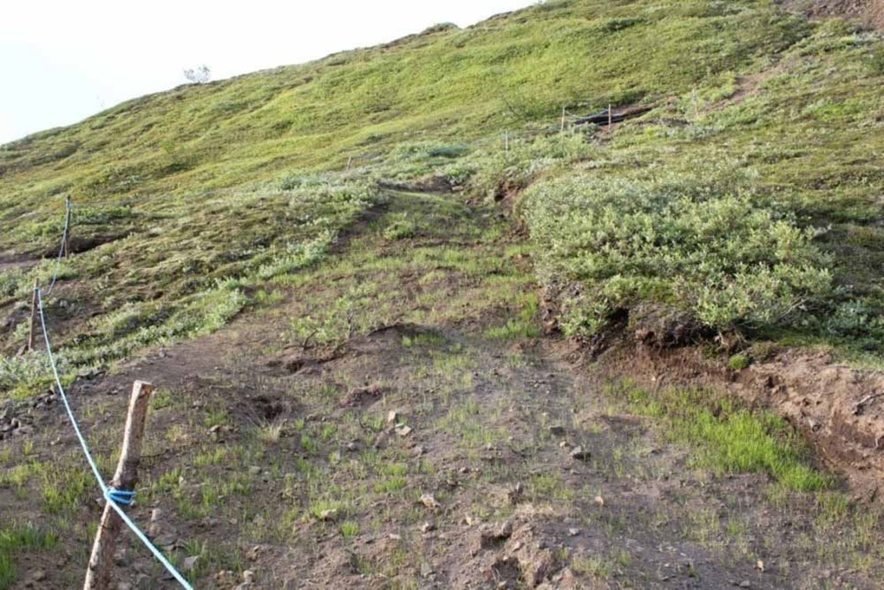 Trail that needs a rest, grass has been planted to prevent soil erosion